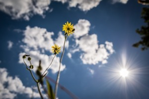 yellow-flower-cloud-sun